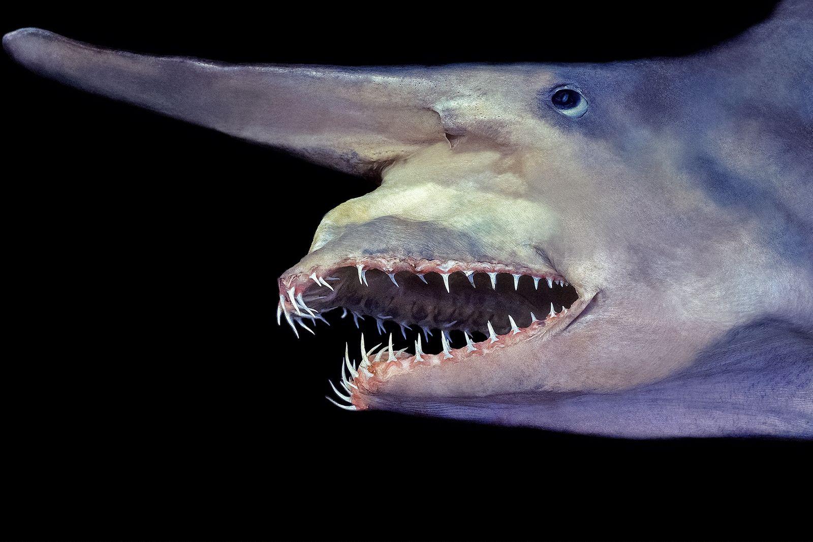 Shark Katran: a safe inhabitant of the Black Sea