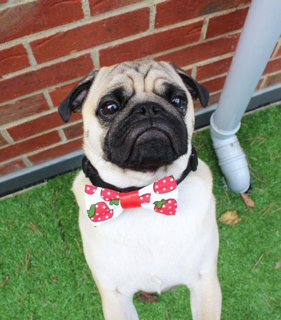 Best Pug Bow Adorable Dog - 07426d0acd8b928059e52c57ea661121  Snapshot_59730  .jpg