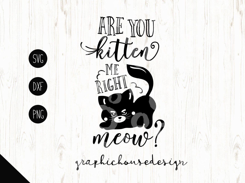 Cat Svg Pets Svg Kitten Svg Meow Svg Are You Kitten Me Etsy Funny Svg Svg Design Cat Quotes