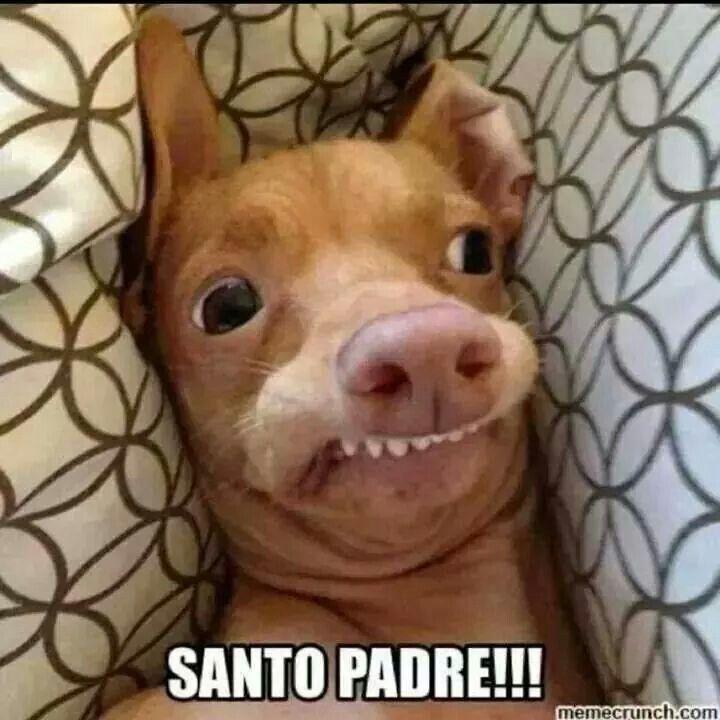 Santo Padre Haha Funny Memes Boricua Edition Q Perro Feo Memes De Animales Divertidos Perros Feos Humor De Perros