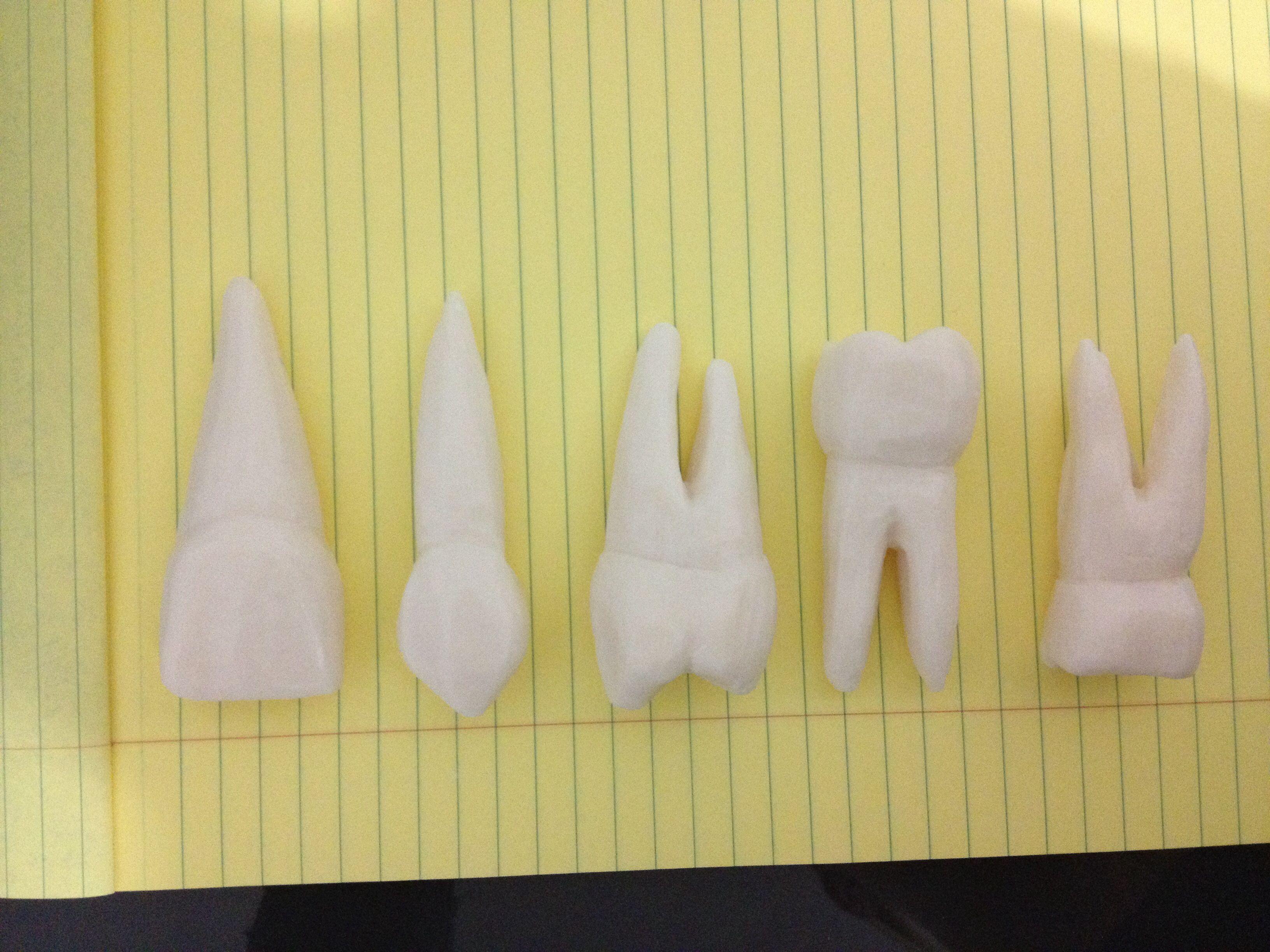 Tooth soap carvings dental school pinterest dental dental art