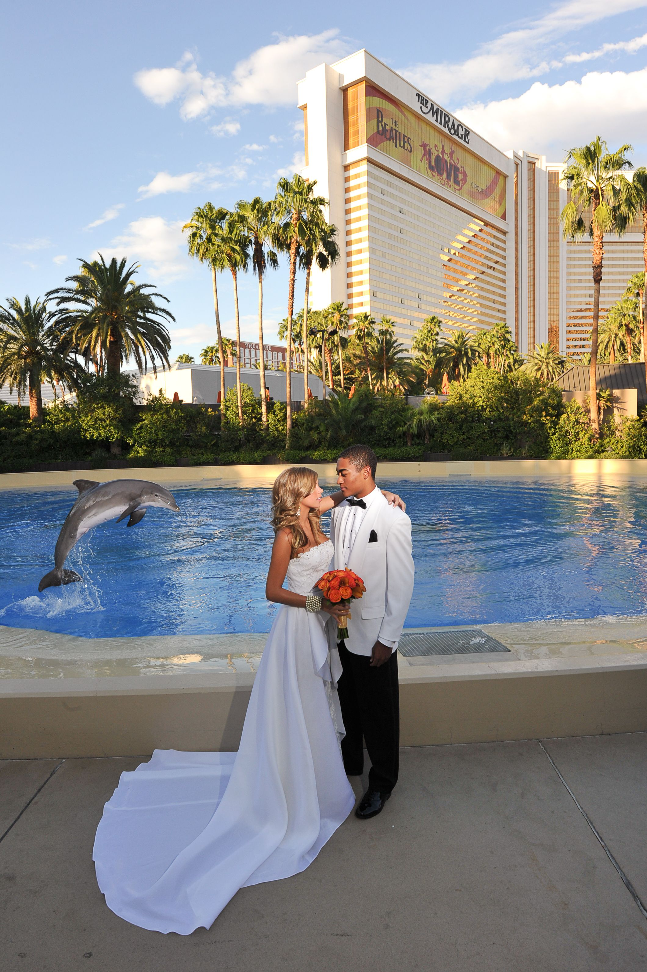 Weddings At The Mirage Our Dolphins Want To Congratulate You Too Info