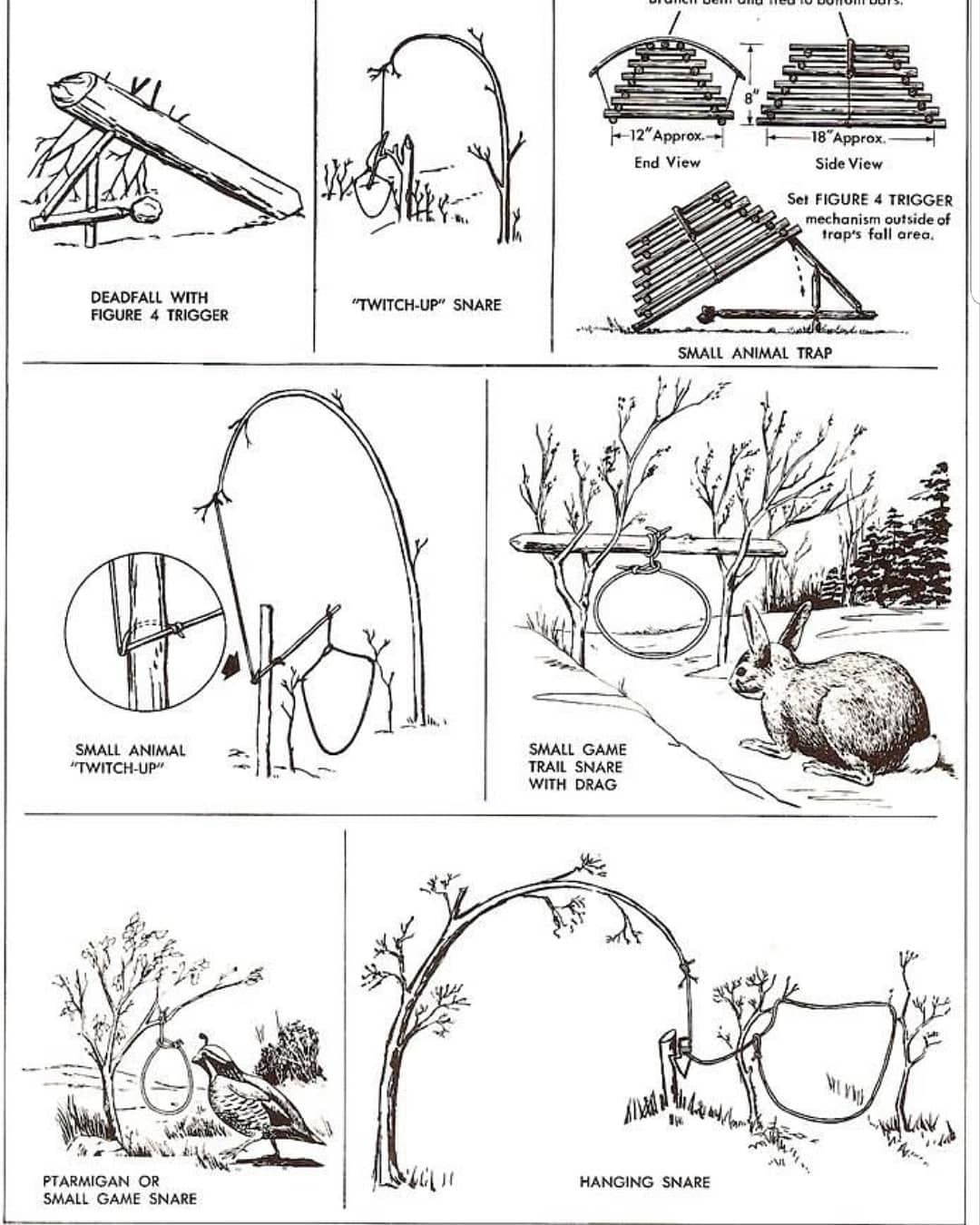 Survival Trapping 4 Easy Traps To Learn Survival Skills Wilderness Survival Survival Techniques
