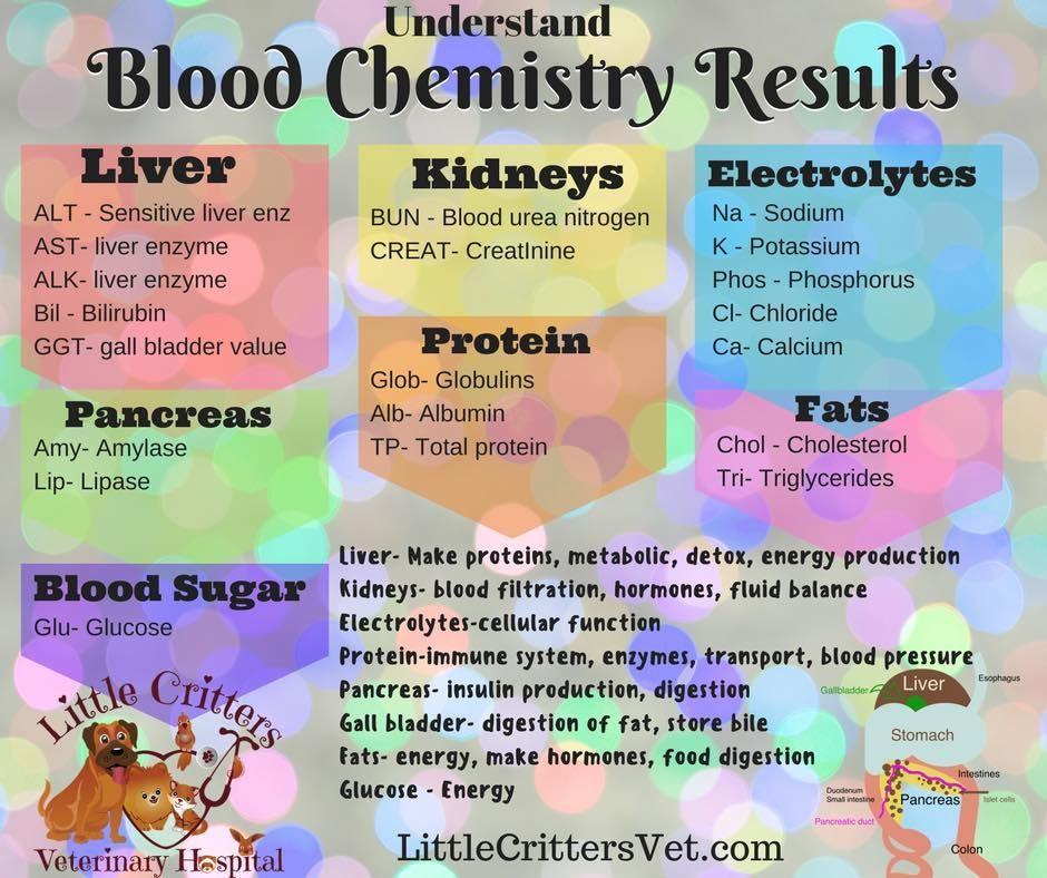 canine & feline blood chemistry Vet tech school, Vet