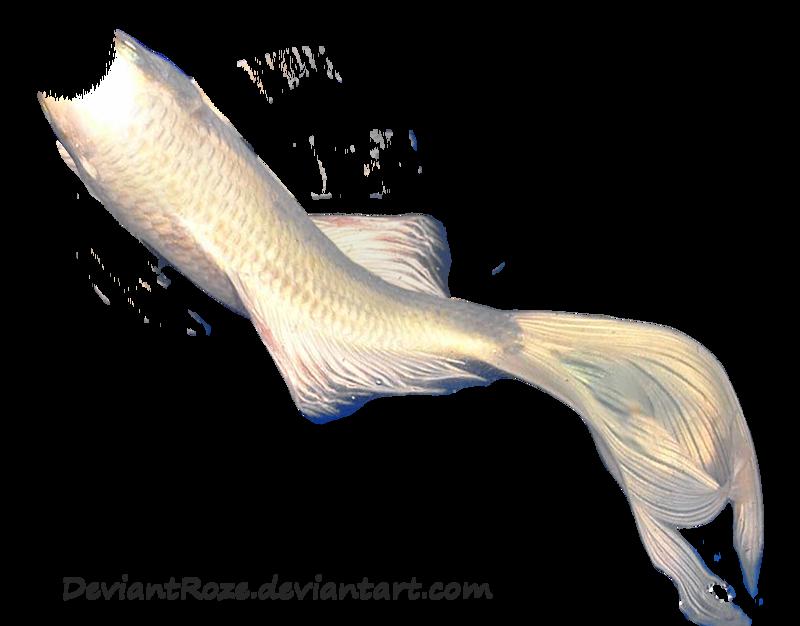 Mermaid tail 06 white koi by deviantroze on deviantart for Koi fish tail