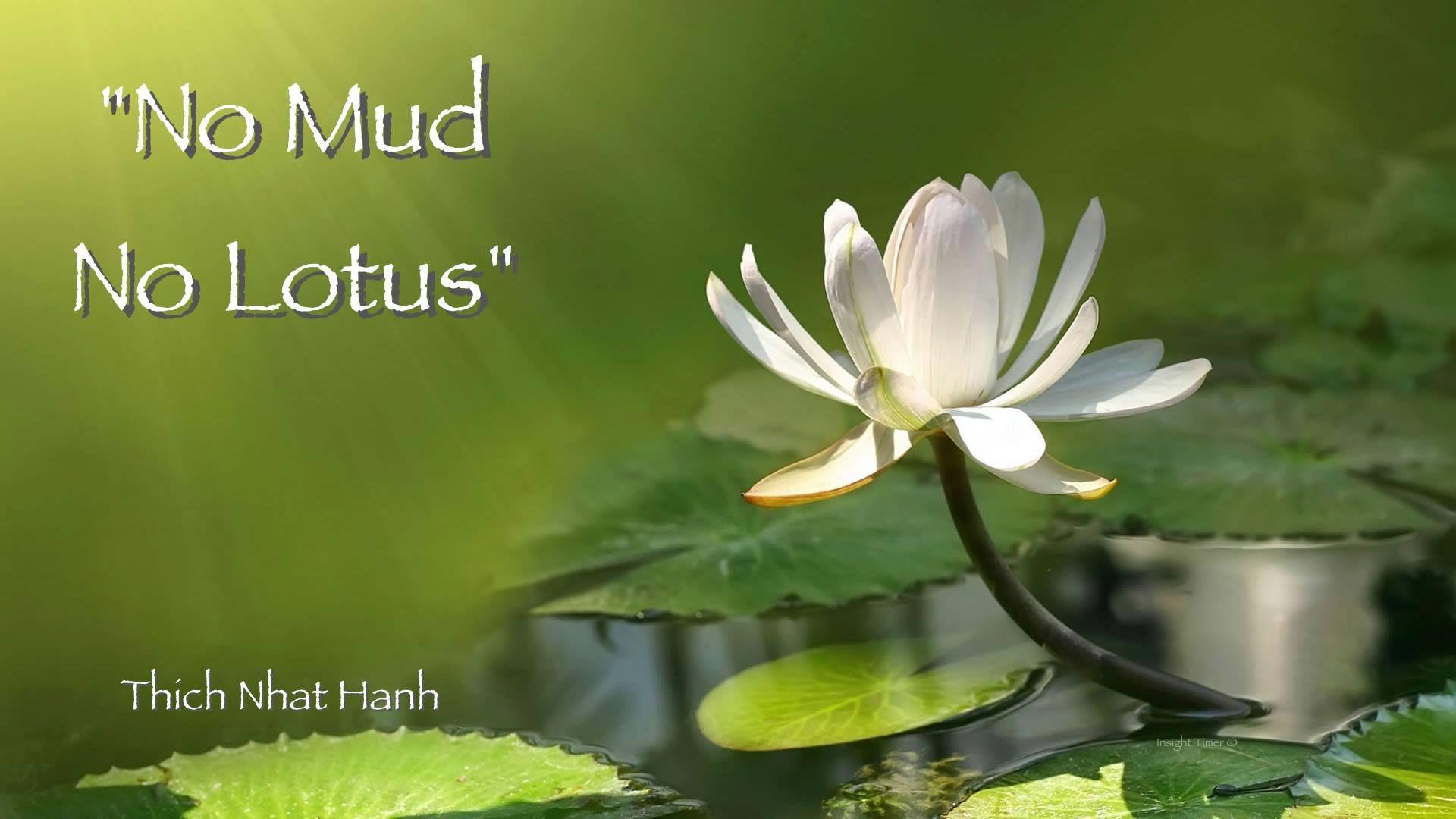 Lotus, modder en wandelcoaching - Natuurcoach.