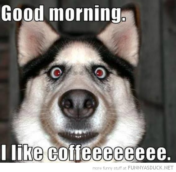 Funny Animal Good Morning Google Search