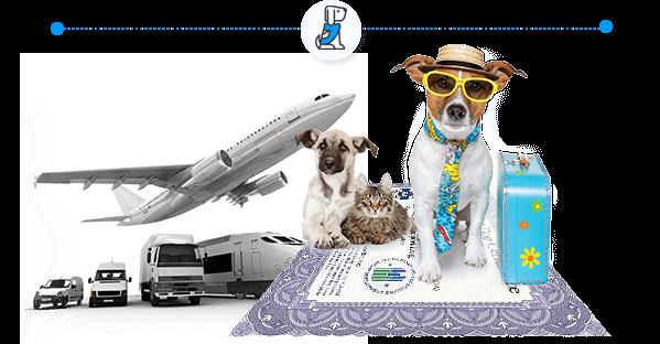 American Service Pets ESA Letters Online Emotional