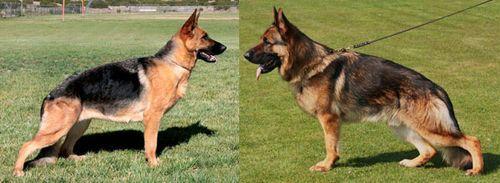 Baerental German Shepherd Puppies For Sale In Nh Puppy Training