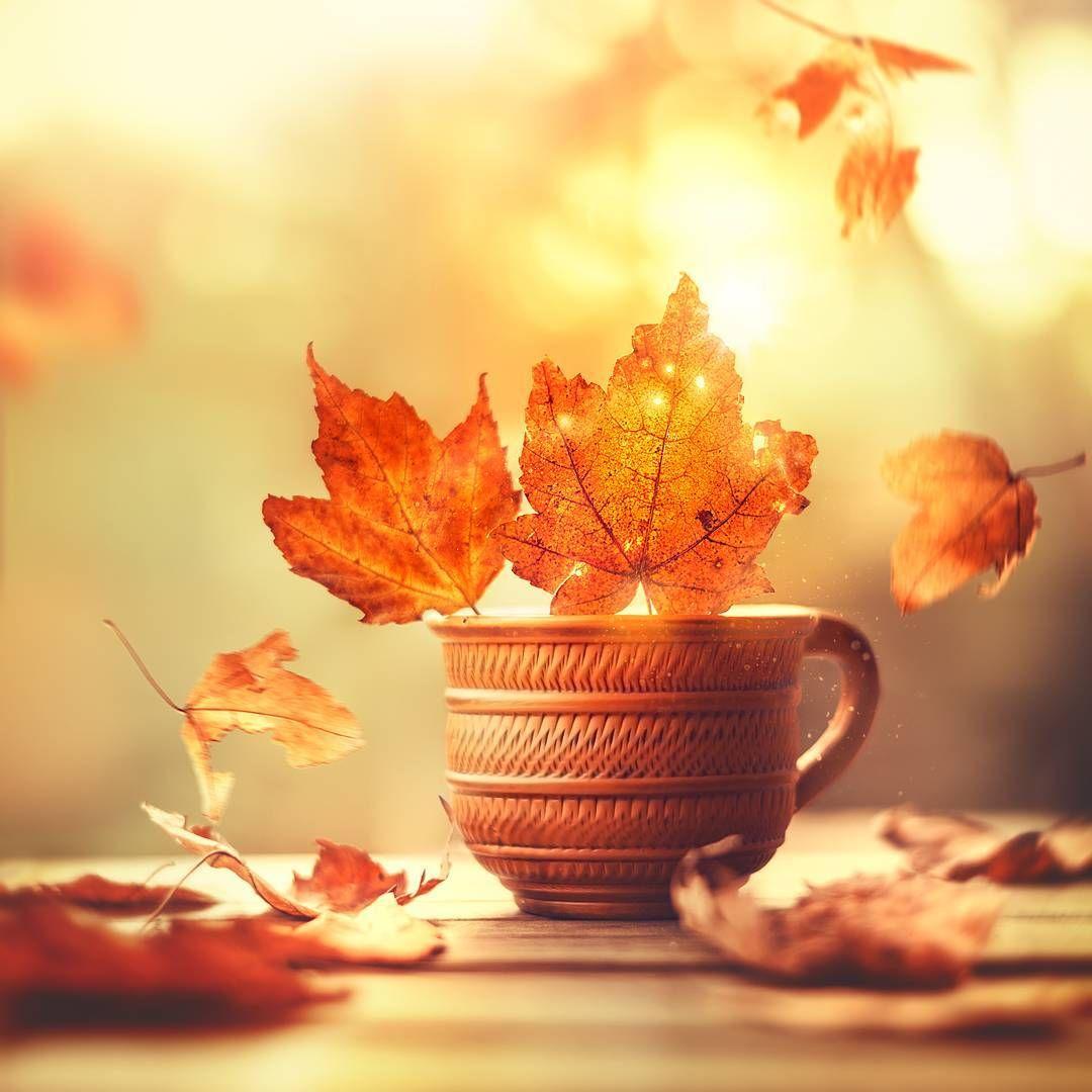 Открытки с осенними листьями доброе утро