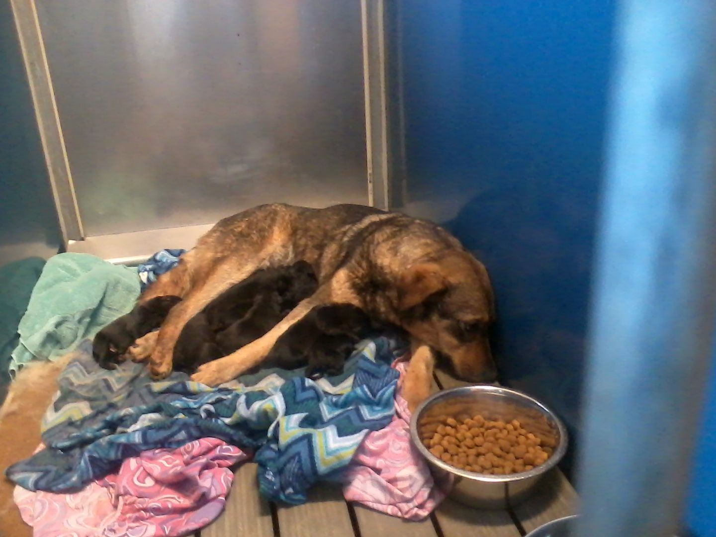 Hall County Animal Shelter Gainesville Georgia Dog Found With