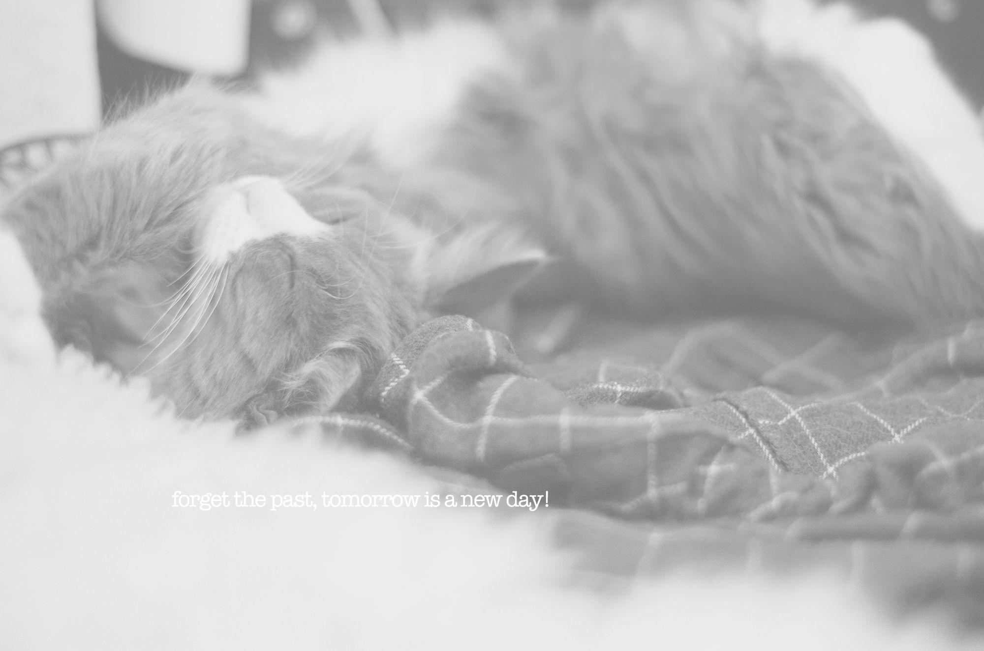Alma sleeping in the laundry.
