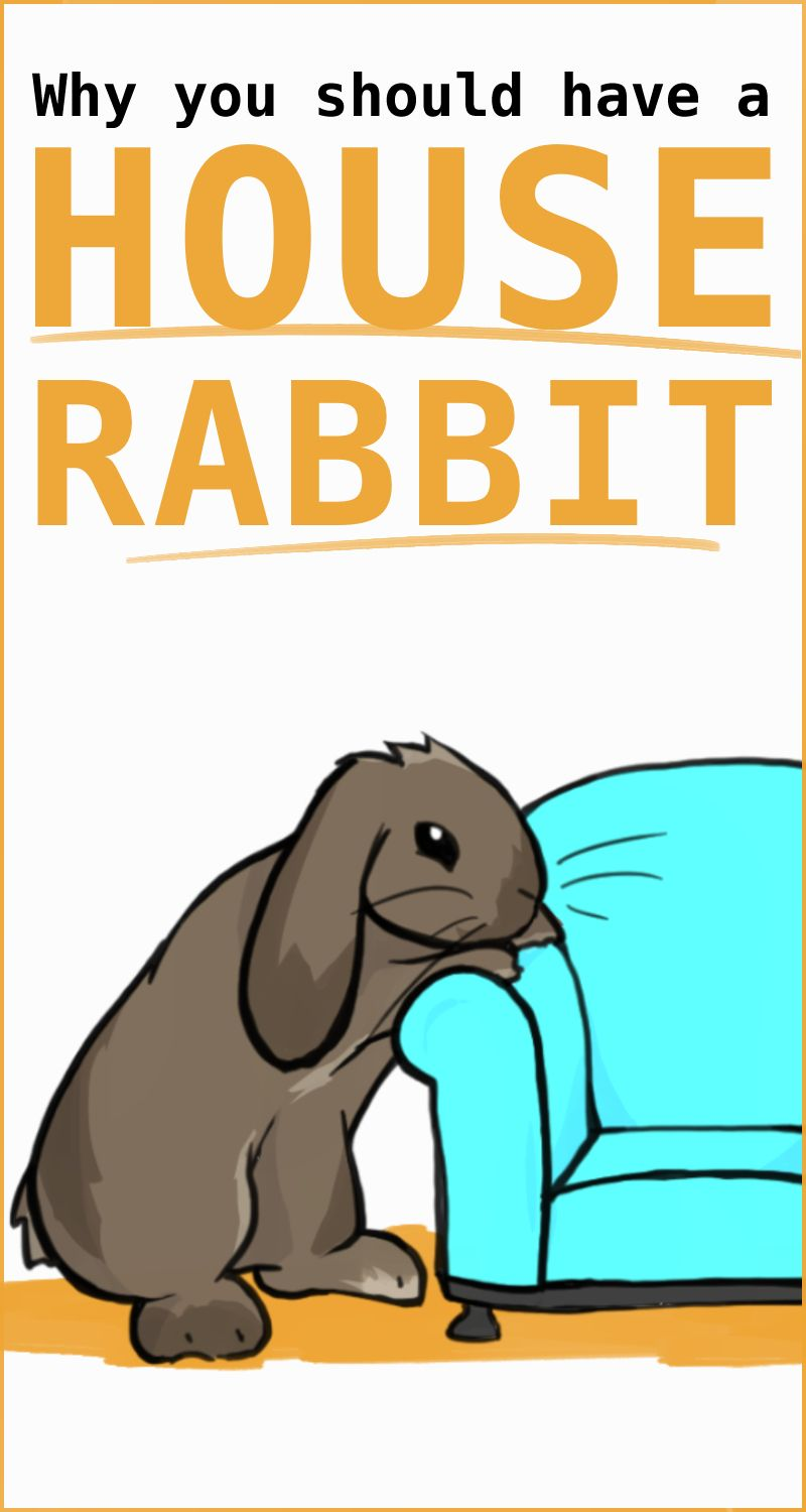 House Rabbits Why It S Best To Keep Rabbits Inside In 2020 House Rabbit Pet Rabbit Care Pet Rabbit