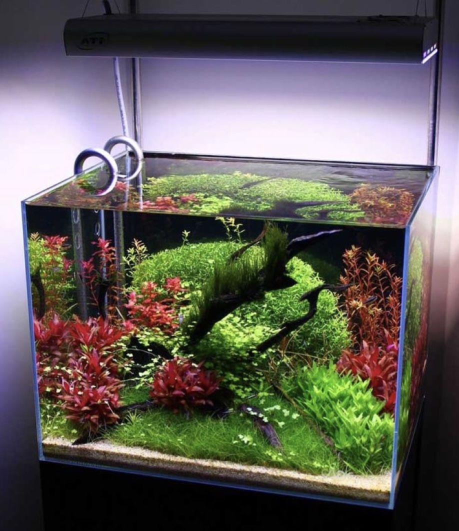 пример нано аквариум картинки продукция переплавляется