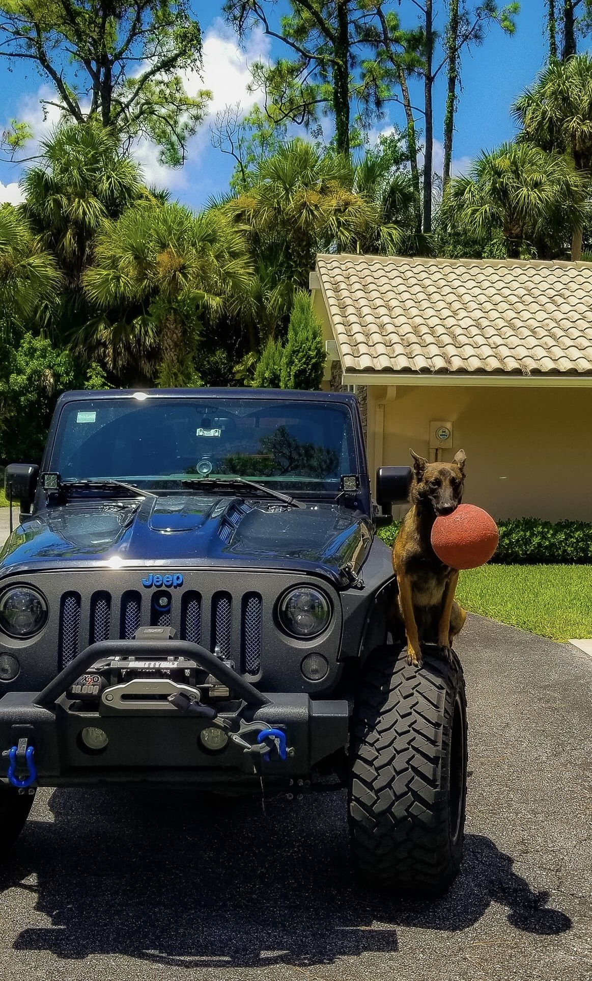 A Belgian Malinois And Her Toy Belgian Malinois Jeep Dogs Belgian Malinois Puppies