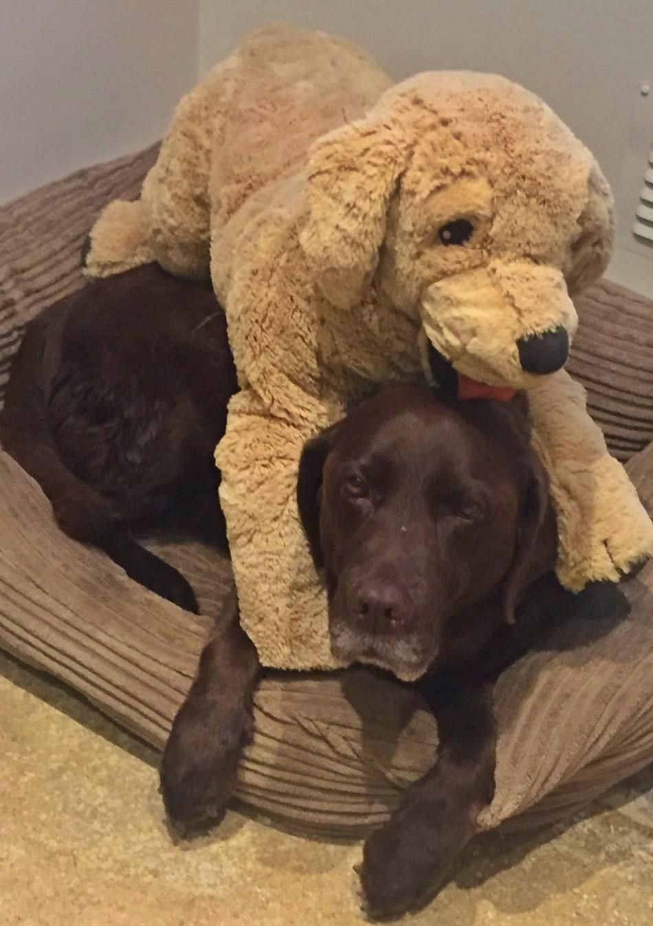 Best buddies iftqbyhv cute uc pinterest dog