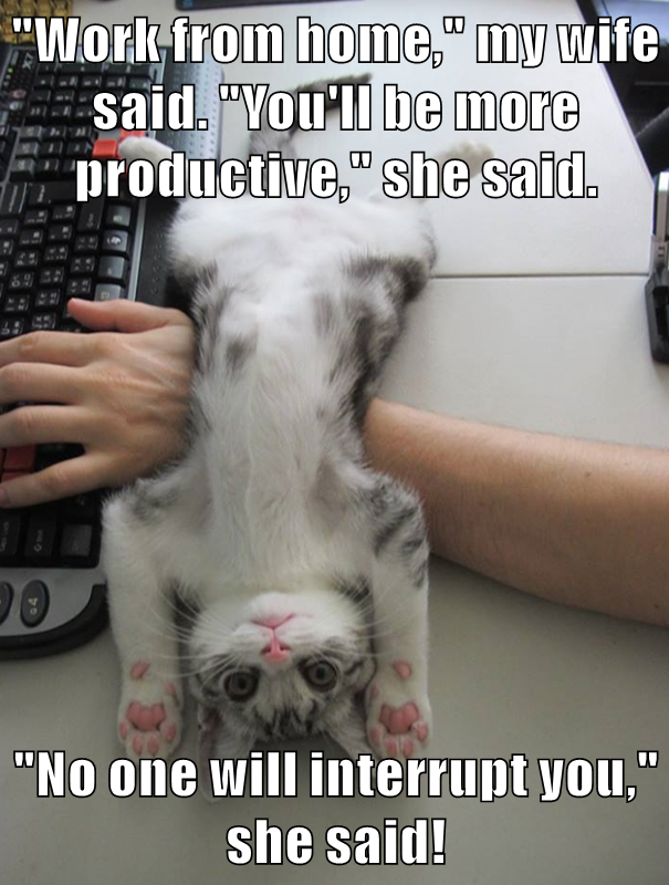 clean funny cat memes