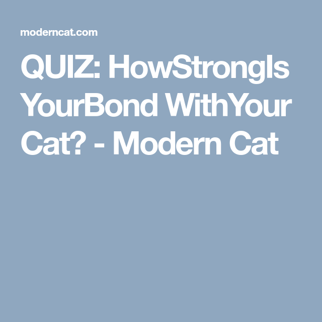 QUIZ: How Strong Is Your Bond With Your Cat