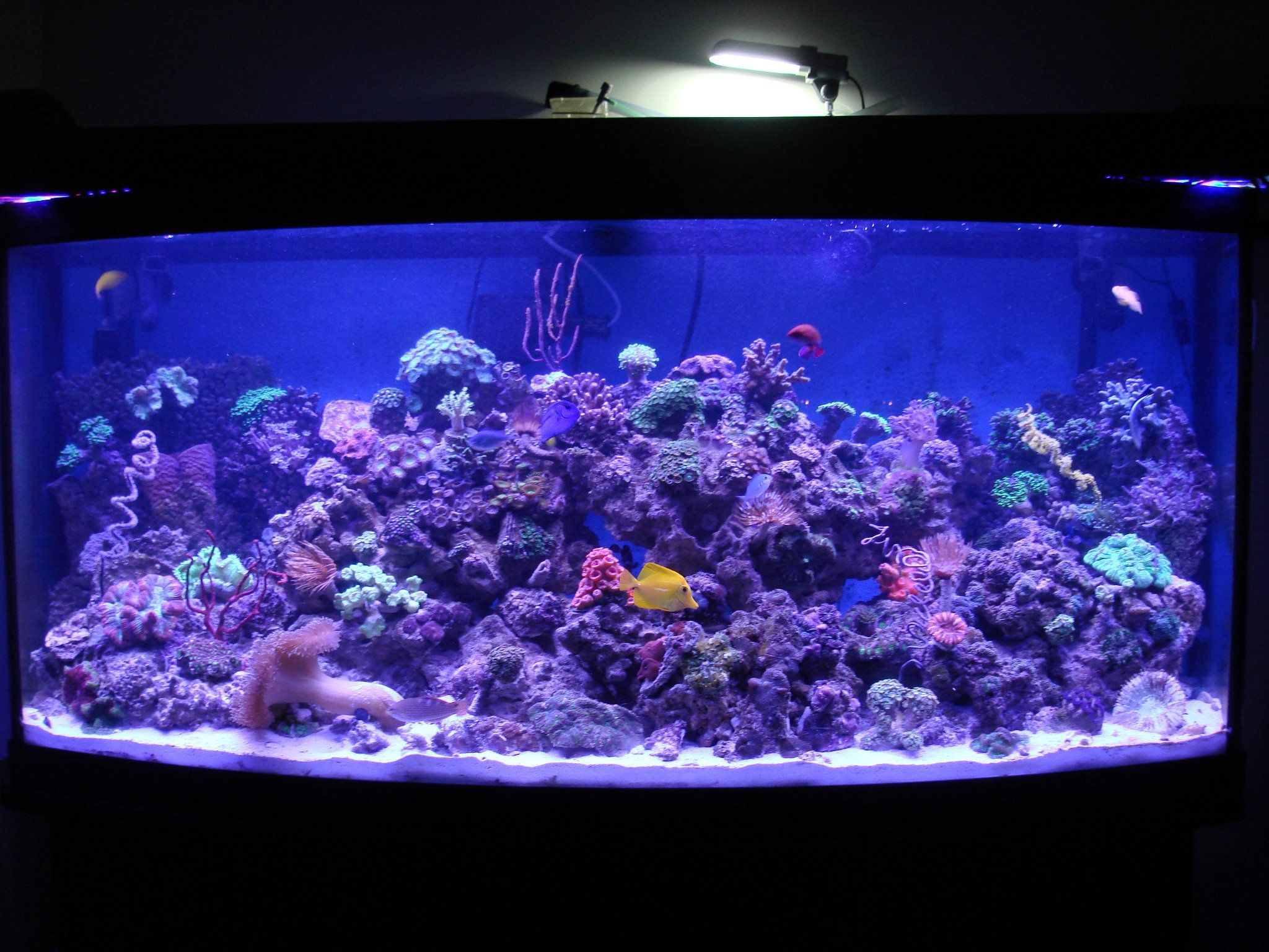 Take a look at Reef Culture s 1200 gallon display tank illuminated