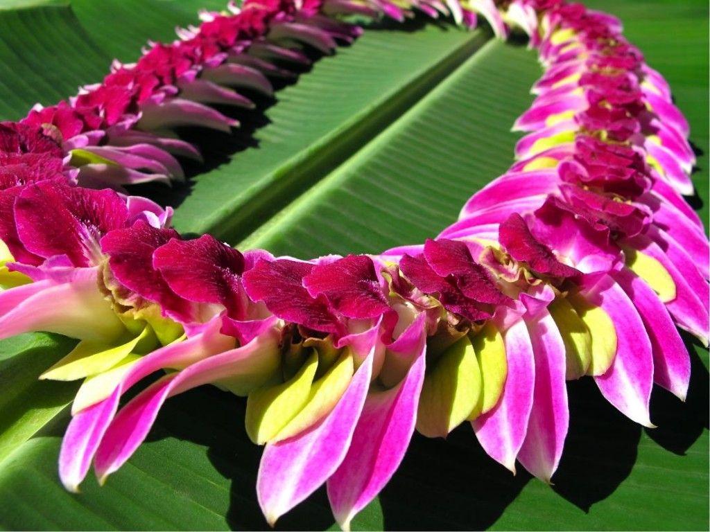 Fresh hawaiian leis lovely leis pinterest hawaiian leis leis fresh hawaiian leis izmirmasajfo Image collections
