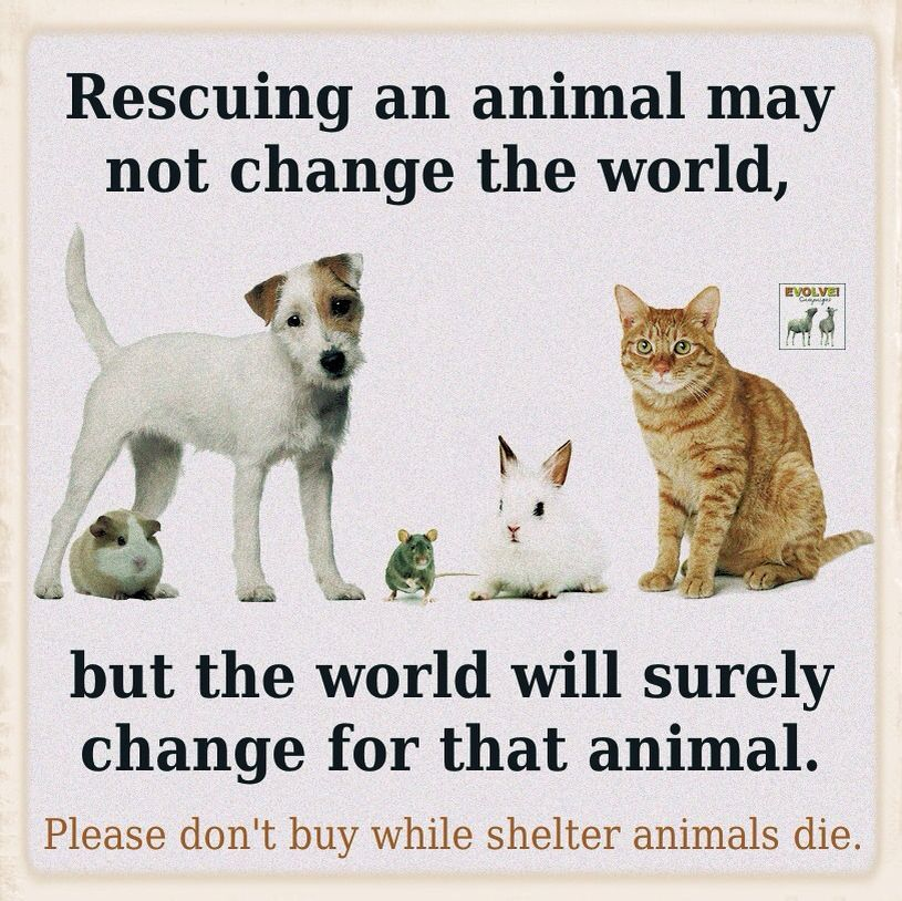 Pin By Kaletra Bevis Elam On Vegan Truths Animal Shelter Animal Advocacy Animal Activism