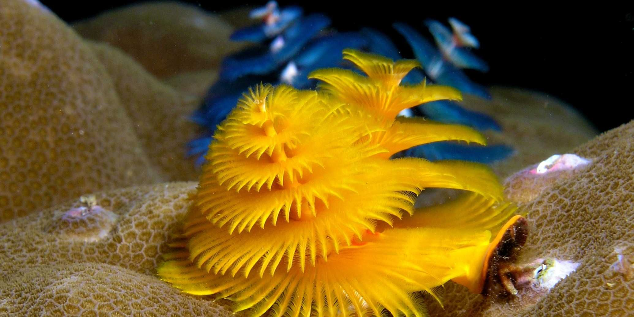 23 Fantastic Images Of The Incredibly Weird Things In The Ocean Ocean Creatures Underwater Creatures Worms