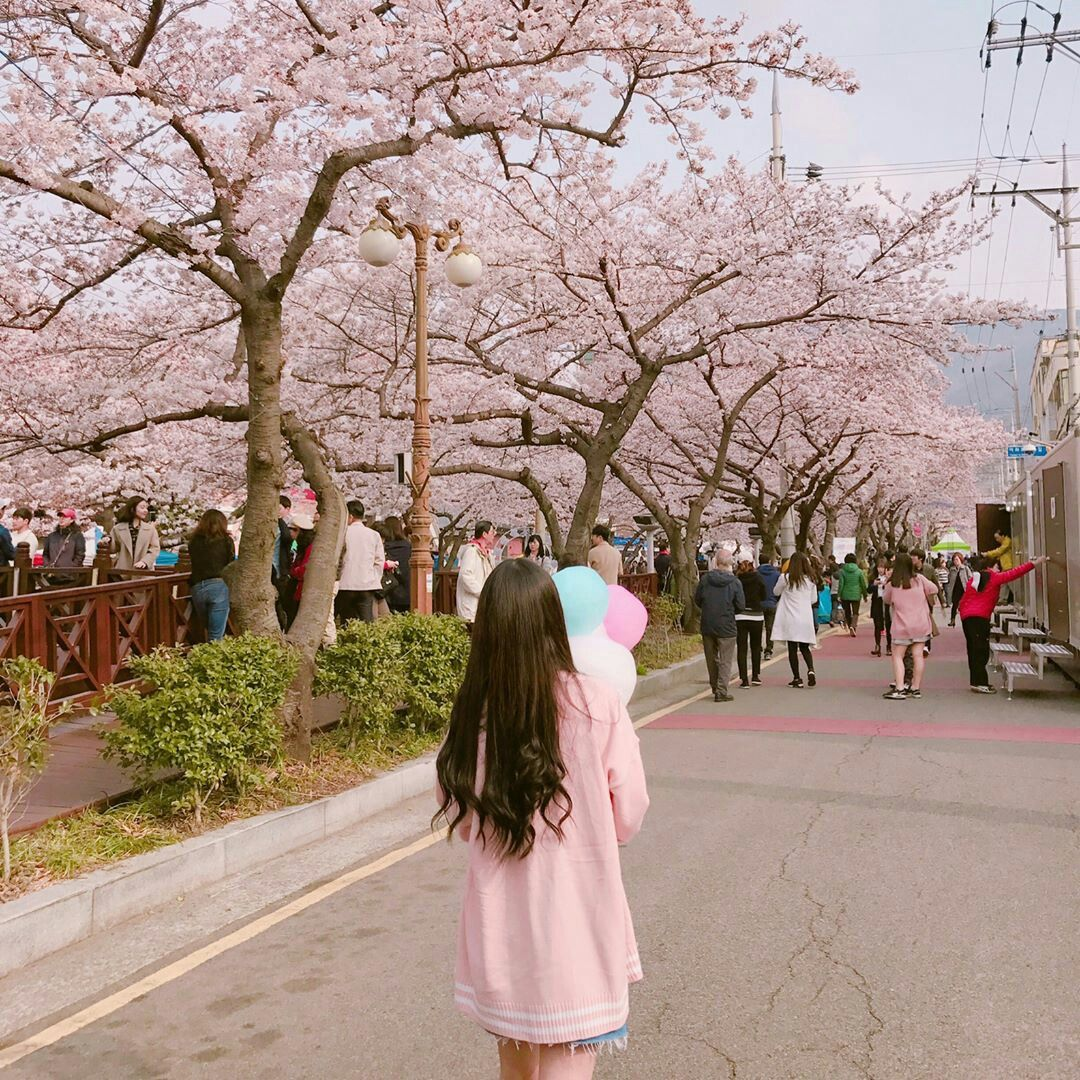 Cherry Blossom Aesthetic Pink Korea Girl Instagram Aesthetic Pink Street Korean Aesthetic