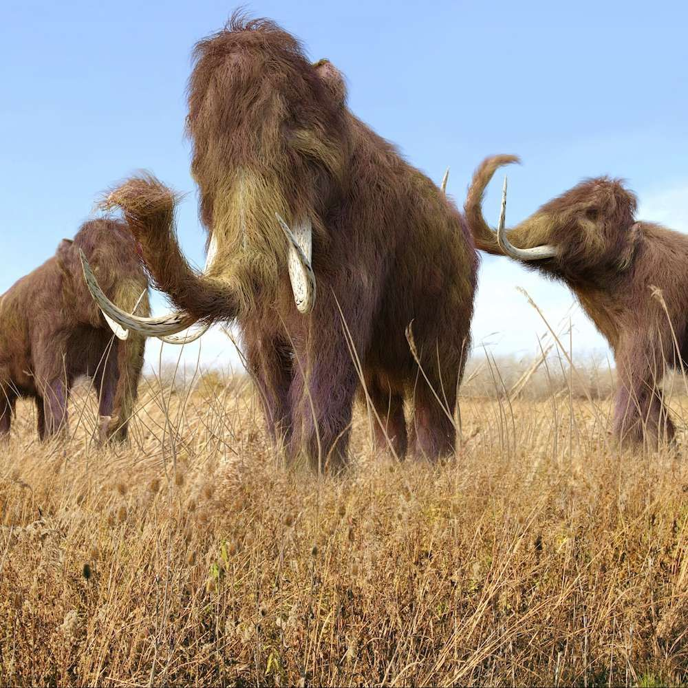 Wooly mammoths were alive when the pyramids were built