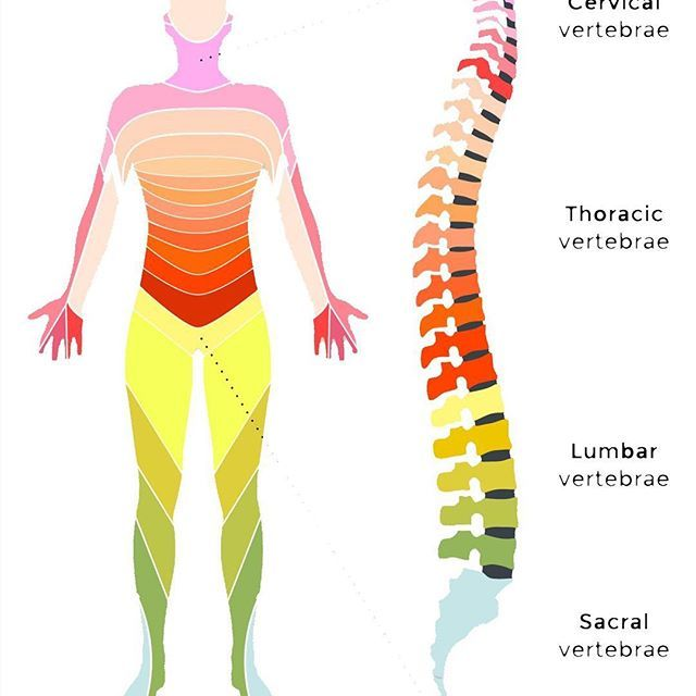 LUMBAR: The lumbar region (lower back) is the most important part of ...