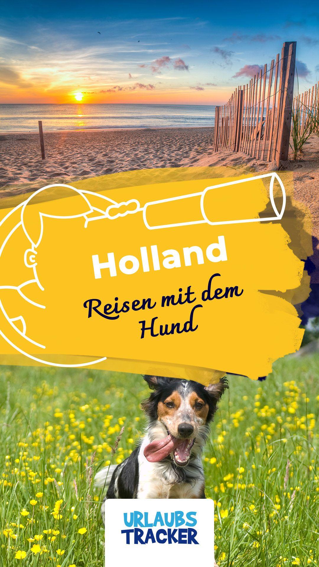 Reiseguide Fur Holland Mit Hund Tipps Hundestrande Ferienhauser Holland Mit Hund Urlaub Mit Hund Holland Holland