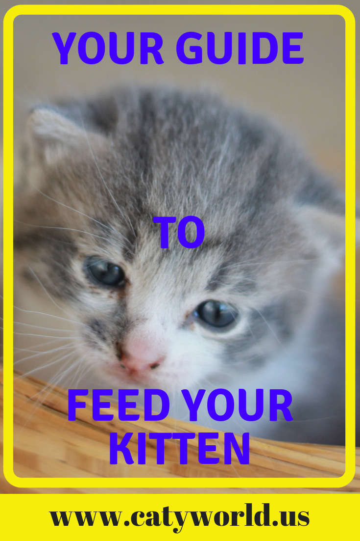 Hii Kitten Lovers In This Pin You Gonna Pick A Kitten Cuddles Guide That Allow You To Feed Your Kittens Baby Safely With Images Kitten Cuddle Feeding Kittens Baby Kittens