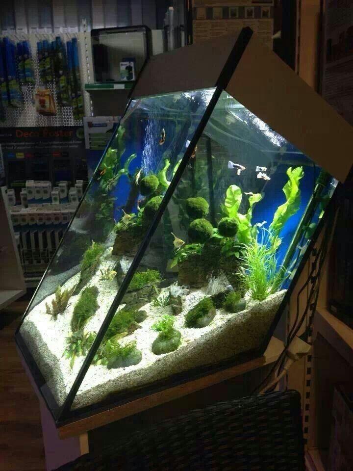 Home Aquarium Design Ideas: Aquarium, Aquarium Fish Tank