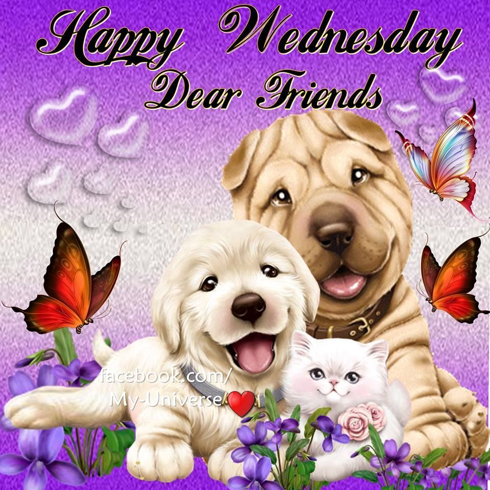 Cute Animals Wednesday Quote Good Morning Happy Cute Animals Good Morning Wednesday