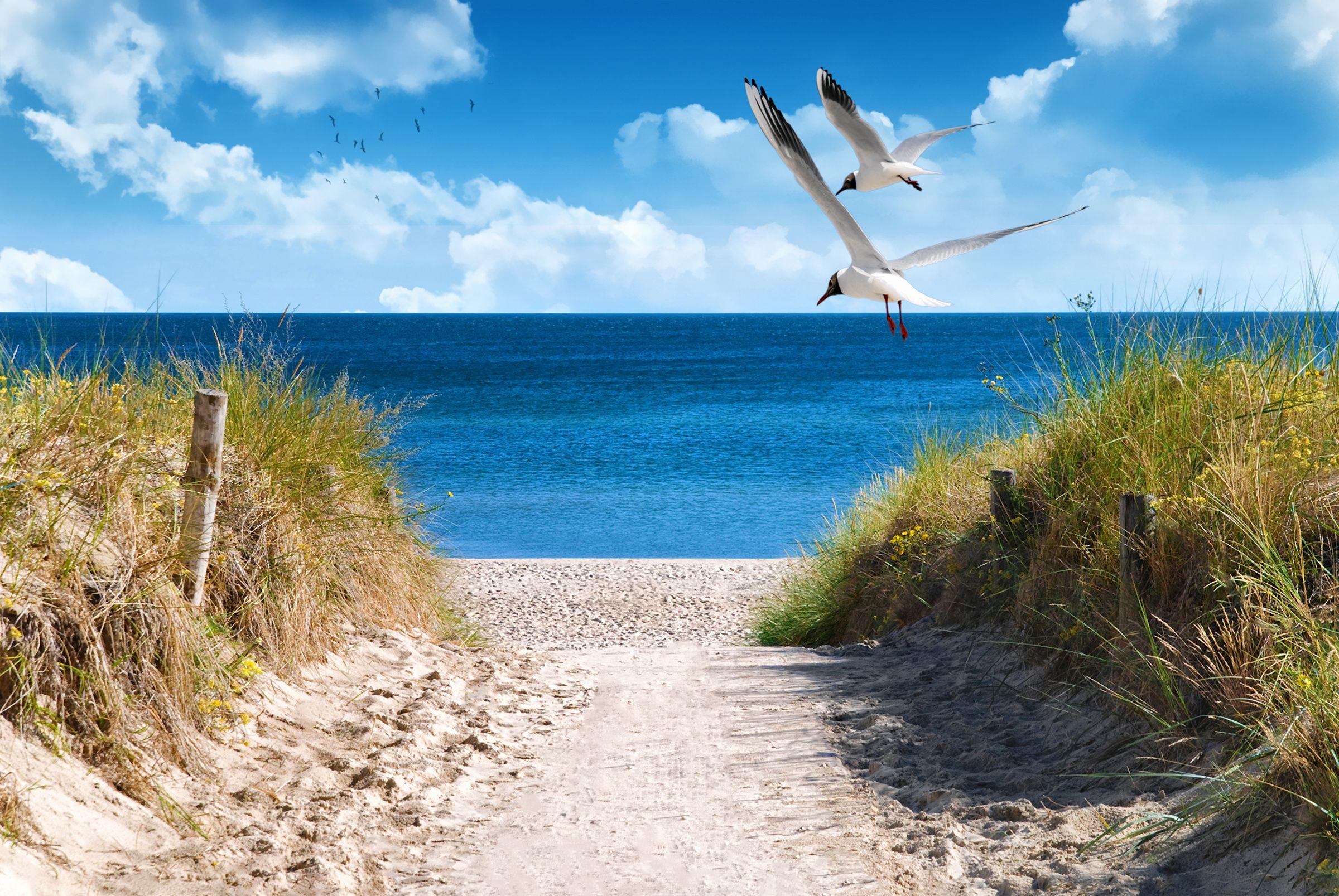 Ab in den Urlaub, am Besten SOFORT! Ostsee Strand
