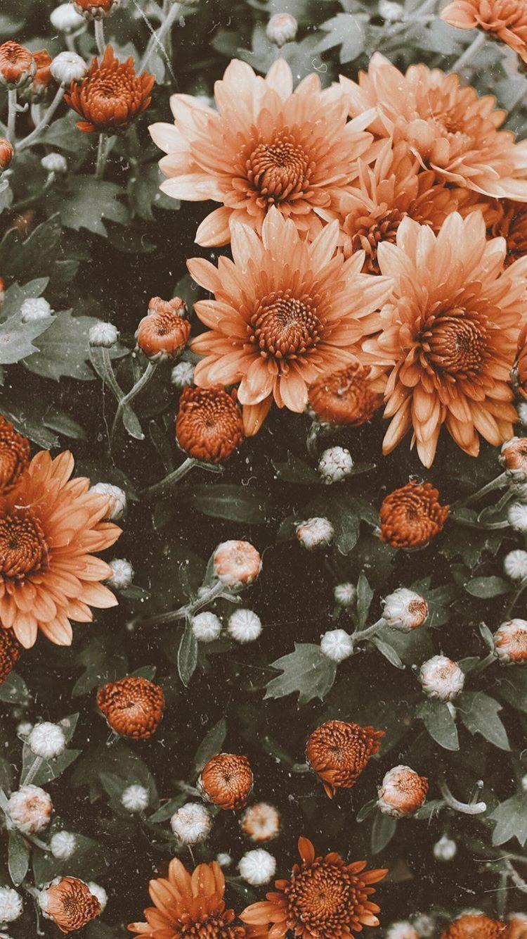 Flowers #lbloggers #fblchat #fbloggers #bbloggers #fallwallpapers