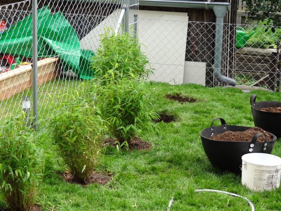 Bambushecke oder Pflanzgefäß mit Bambus setzen