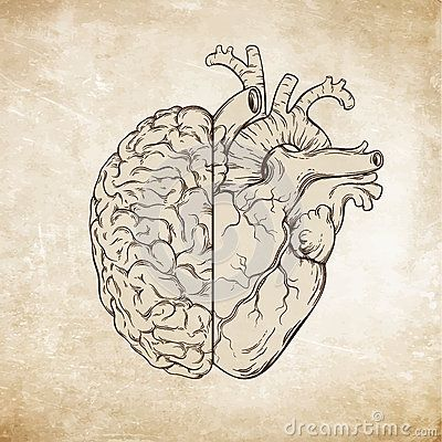 Hand Drawn Line Art Human Brain And Heart Da Vinci Sketches Style