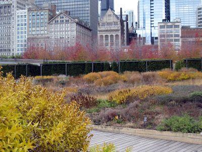 Oudolf Lurie Garden Millennium Park Chicago
