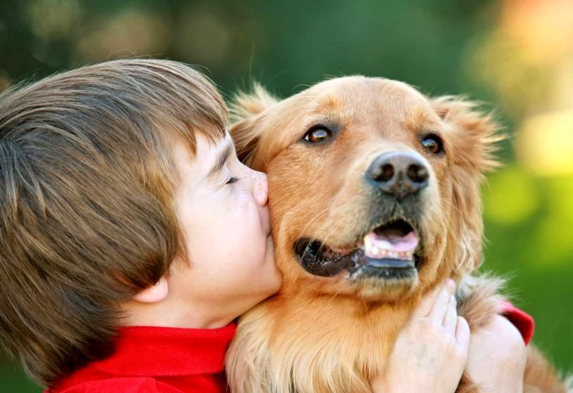 Convivio Com Cachorros Reduz Asma Golden Retriever Animal Behavior Dog Biting