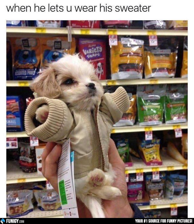 When He Lets You Wear His Sweater Funny People Pictures - 22 adorable animals wearing miniature sweaters