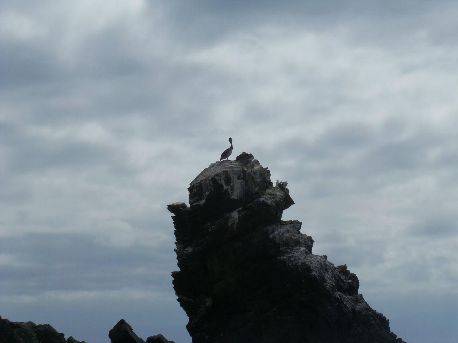 El Camino de mis Ojos - The Way of My Eyes: Visitando Isla Damas en Punta de Choros, Coquimbo - Chile