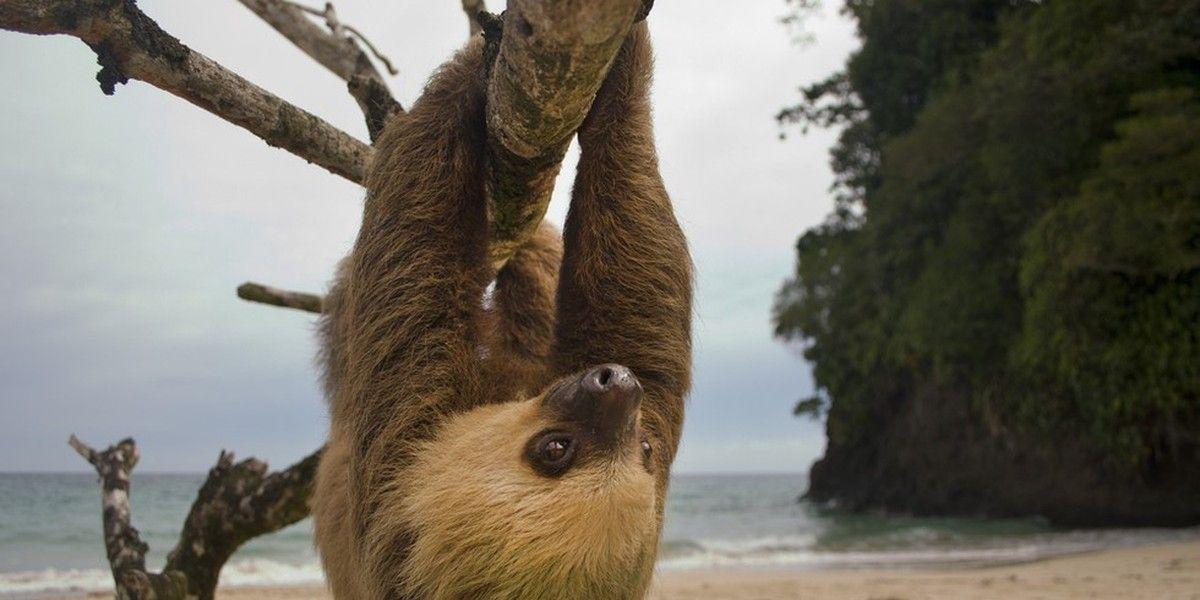 La Nouvelle-Zélande a établi un texte de loi sans précédent incroyable en statuant légalement sur ce que les amateurs de la nature savent déjà