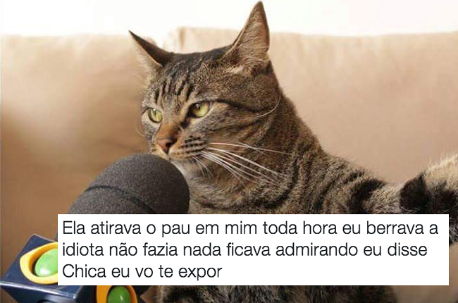 b3a100421 As pessoas criaram legendas para a foto de um gato dando entrevista ...