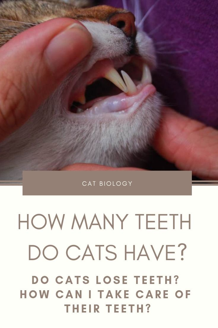 How Many Teeth Do Cats Have? Do Cats Lose Teeth? How Can I