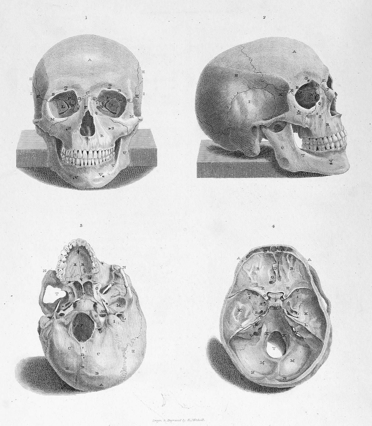 Views of the Adult Human Skull. Top: Front and side viewsBottom left ...
