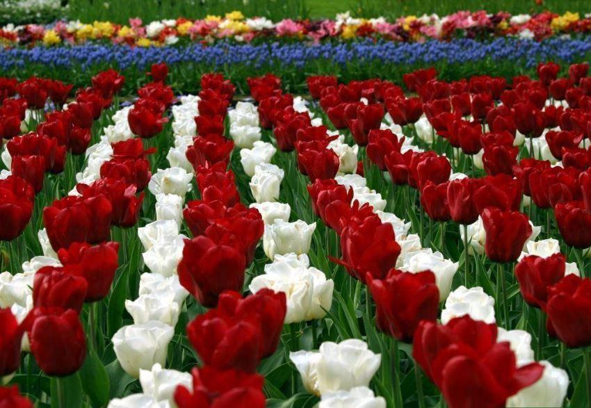 Flower Garden Wallpaper Hd Download