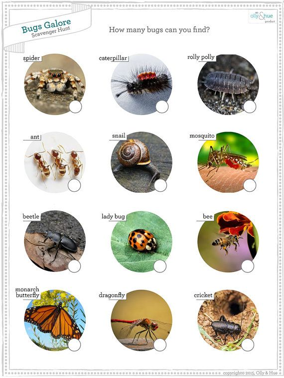 Downloadable Bug Scavenger Hunt Kids Printable Insect Camping Game Nature