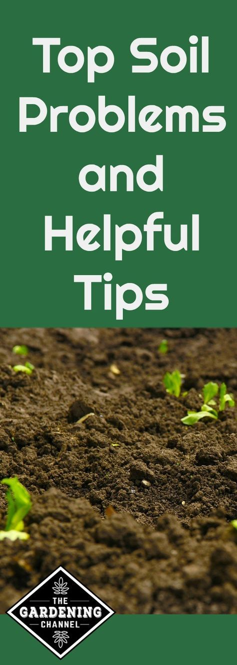 Top Soil Problems And Helpful Tips. Top SoilOrganic GardeningVegetable ...