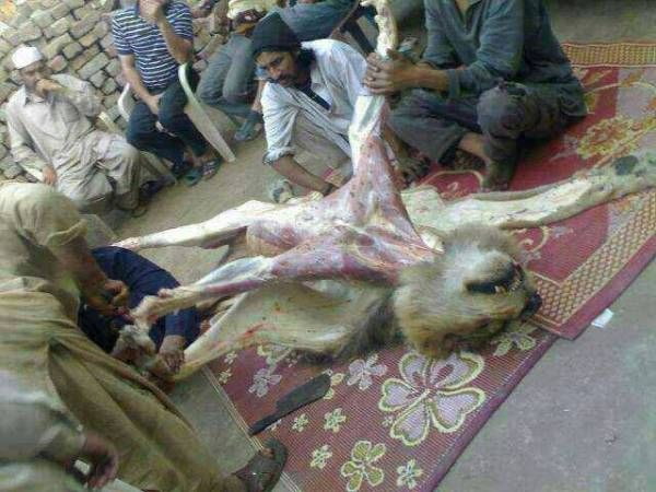 Please help animals in Pakistan  Sample letter to send to you embassy