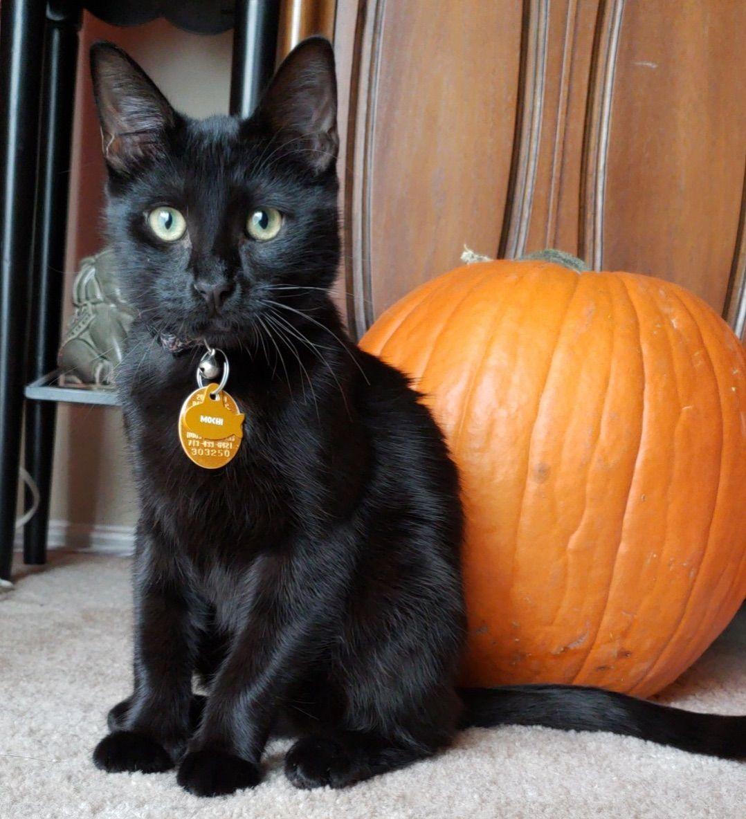 Mo The Black Cat...🐱😍 💋 Halloween Familiar BlackCat